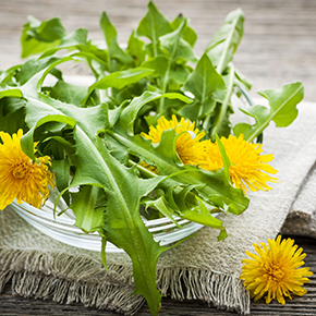 Dandelion Fragrance Oil