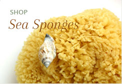 Shop Sea Sponges